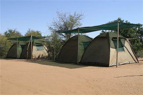 Ngala Bush Camp - Our home in the bush!
